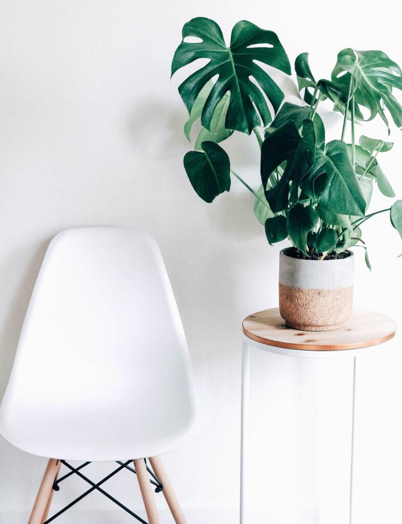 page rse chaise et plante